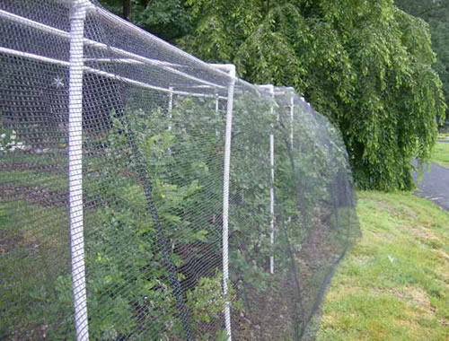 Bird Netting for Protecting Plants and Fruits Against Bird
